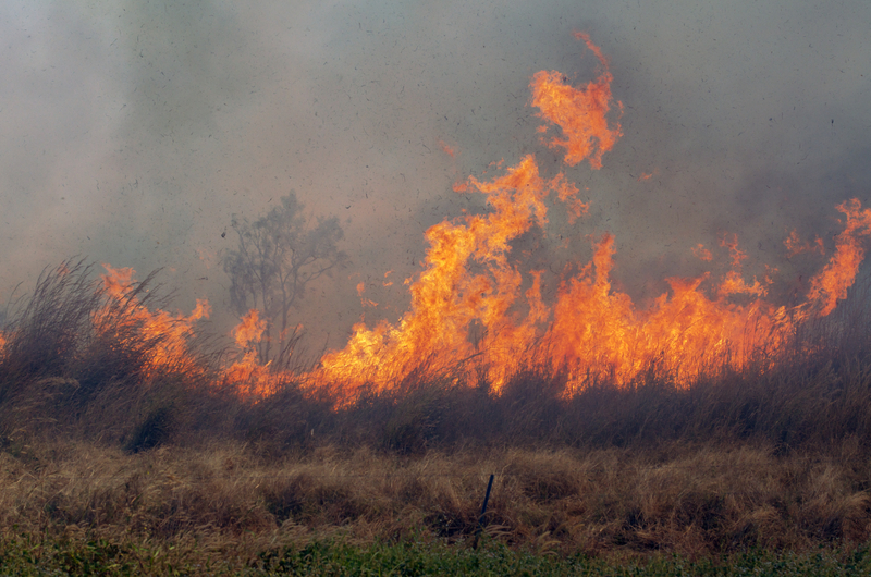 Top tips for protecting your house from bushfire this summer.